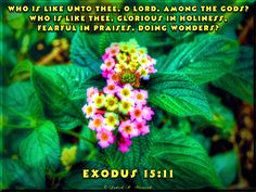 Exodus 15:11.  Who is like You, Lord?