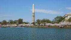 Washington, DC, Cherry Blossom week, April 2013