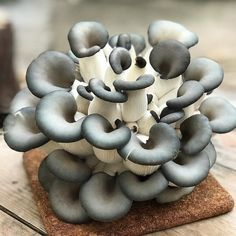 Home grown mushrooms bought from the local store but we have no idea what they are - can anyone shed any light on the subject . . . #mushrooms #growbag