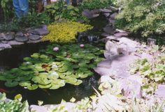http://paversandpondsplus.artsandletters.net/new-ppp//services/pond-one.jpg