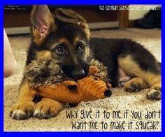 The German Shepherd Dog Community. Cute Puppies, Cute Dogs, Dogs And Puppies, Doggies, Cute Animal Pictures, Dog Pictures, Animals And Pets, Cute Animals, Amor Animal