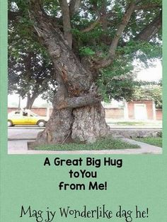 Goeie More, Good Morning Wishes, Big Hugs, Afrikaans, Plants, Friends, Good Morning Messages, Amigos, Boyfriends