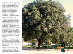 No alla capitozzatura degli alberi