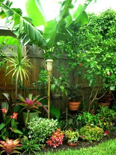 Gardening on pinterest florida border garden and sun for Best easy care outdoor plants