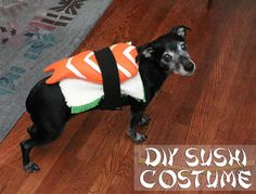 10 cute pet costumes you can easily make yourself pet costumes eatsleepmake diy sushi costume for a dog solutioingenieria Choice Image