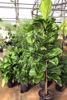 Houseplants Archives - Hyannis Country Garden