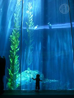 The Aquarium of the Pacific is located in nearby Long Beach. Children and adults alike will love this world-class aquarium, featuring educational and interactive exhibits.