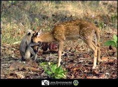 Winner 2013-14 Lions Clubs International Environmental Photo Contest submission. Category Winner: Animal Life. Photographer: Ripu Daman Singh. Lions Club: Bhandara Brass City (India)