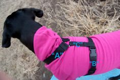 Dog Harness for GoPro Camera