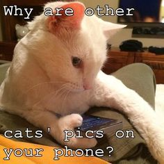 Why are other cats' pics on your phone? #catoftheday