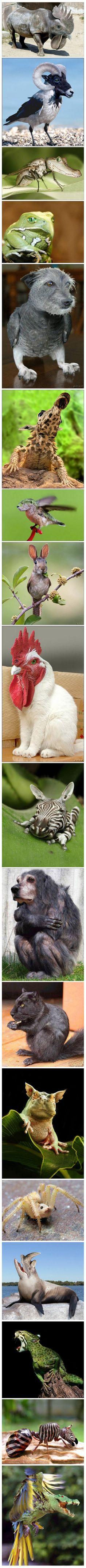 love these hybrid animals