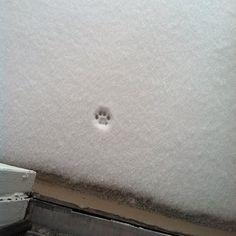 雪の日。ネコちゃんが、一歩、外に踏み出したけど、「寒いからやっぱり止めた!」となったのが分かる図。