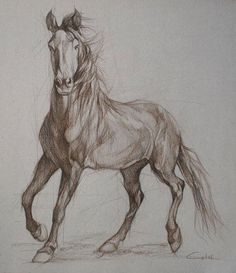 Items similar to Wild horse full front silhouette in sepia 2 - Equestrian Art Portrait on Etsy Horse Drawings, Animal Drawings, Art Drawings, Animal Sketches, Art Sketches, Sketches Of Horses, Horse Artwork, Horse Paintings, Horse Sketch