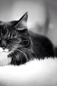 whisker love ♥