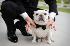 Ringträger für Ihre Hochzeit gesucht? Unser Tipp: Hunde sind die besten für den Job! Image: 4