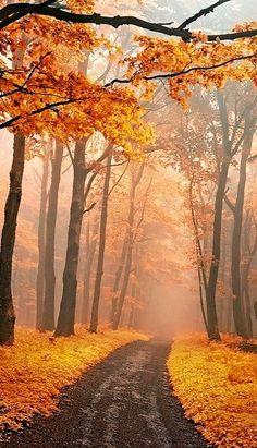 Autumn Forest, Czech Republic