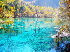 Jiuzhaigou Valley, Sichuan Province, China. Lying on the highest tableland in the world between the Sichuan Basin and the Qinghai-Tibetan Plateau, this valley covers altitudes ranging from 2,000 meters (6,561 feet) to about 4,300 meters (14,107 feet) and features a large number of lake groups, waterfalls and rich variety of endangered plants and fauna. #Travel #charmingChina