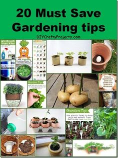 20 Must Save Gardening tips
