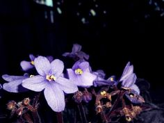 lolita lempicka | Tumblr