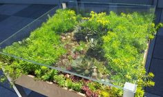 The Living Table is a low-maintenance planter.
