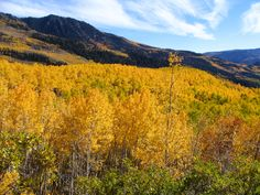 The Pando clonal colony of aspen trees, all of which are genetically identical. Dated at between 80,000 and 1,000,000 years old! Also the heaviest living organism, weighing in at an astonishing 6,000,000 kg!