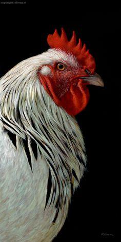 WEB_alexandra_klimas_charlie_the_rooster_II_80x40cm_oil_on_canvas