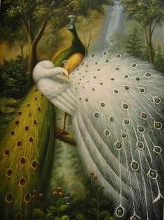 Amazon.com: 12X16 inch Animal Canvas Art Repro Golden And White Peacocks: Home & Kitchen