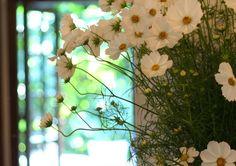 シェ松尾松濤レストラン様の装花 コスモス