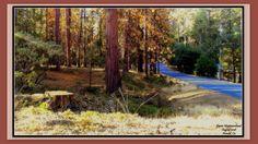 #barkbeetle #california #aug2016
