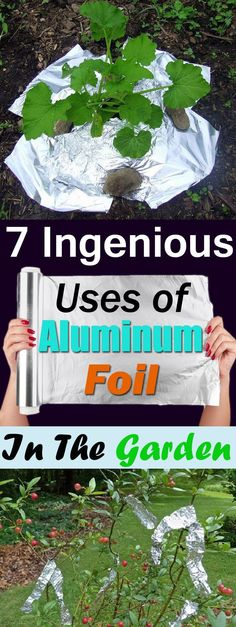"""Ingenious Aluminum Foil Uses in the Garden"""" """"Aluminum foil has so many uses in the kitchen and home but do you know it is also useful in the garden? Check out the 7 best Aluminum Foil Uses in the garden! Regrow Vegetables, Organic Vegetables, Allotment Gardening, Container Gardening, Vegetable Gardening, Veggie Gardens, Indoor Gardening, Planting, Flower Gardening"""