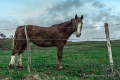 El caballo mojado ~ Fotografía Juanjo Mediavilla
