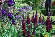 Farver i haven: Mørkerød | Haveselskabet