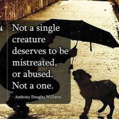 Not a single creature deserves to be mistreated, or abused. - Anthony Douglas Williams Words to live by Beautiful Creatures, Animals Beautiful, I Love Dogs, Puppy Love, Animal Crossing, Animals And Pets, Cute Animals, Stop Animal Cruelty, Animal Quotes