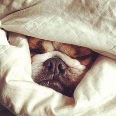 tijd om onder de dekens te duiken