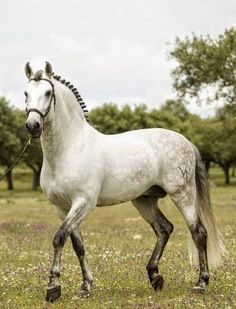 What a fine horse All The Pretty Horses, Beautiful Horses, Animals Beautiful, Dapple Grey Horses, White Horses, Gray Horse, Majestic Horse, Draft Horses, Horse Pictures