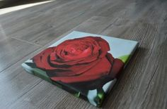 Rose high quality printing picture.  www.canvasfactory.pl