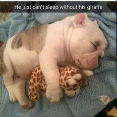 25 Chubby Puppies You Need to Snuggle Right Now Cute Little Animals, Cute Funny Animals, Funny Cute, Funny Dogs, Chubby Puppies, Cute Puppies, Cute Dogs, Funny Animal Pictures, Cute Pictures