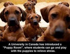 We Canadians are brilliant !