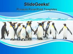 Kings Of The Beach Animals PowerPoint Template 1110 #PowerPoint #Templates #Themes #Background