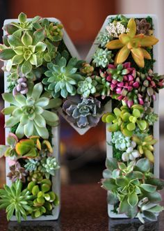 Discovering succulents was the best thing that has happened to me in terms of gardening and design. – Jessica St. Hilaire