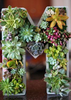succulent letters