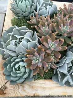 Hello. My name is Melissa, and I'm a succulent-aholic. Maybe it stems (no pun intended) from my intense struggle with having a black thumb growing up, or maybe it's just because they are so darn trend