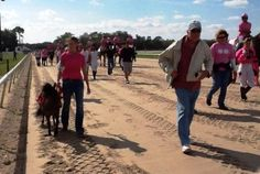 """Tampa Bay Downs mascot Mouse the Miniature Horse was among the celebrants in the """"Walk for Roz,"""" benefiting the Susan G. Komen for the Cure fight against breast cancer. Thanks to the horsemen and horse women, jockeys, officials and friends of the late Dr. Rosalyn Randall for such a marvelous tribute to her fighting spirit!"""