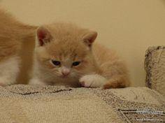 P3201461 Cats, Animals, Gatos, Animales, Animaux, Animal, Cat, Animais, Kitty