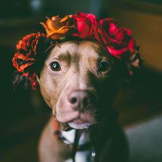 cachorro com coroa de flores pronto para o carnaval