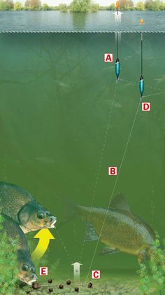 how to rig up to catch garfish