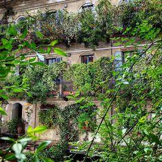 #greencity#milan  #milanodavedere#bellamilano#igmilano#milano#visitmilano#italia#italy#vecchiamilano#courtyard#cortile#greenwall#casadiringhiera#milanosegreta#corsocomo#10corsocomo#galleriasozzani#greenlovers#milanodaclick#milanodabere#fashionmilan#fashionmilano#jasmine#wordpressphoto#cortilemilanesi#cortiliaperti#oldbuilding#greenfacade#verticalgarden by tantraeluciphoto