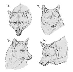 YCH Wolves III - SOLD by makangeni beautiful cutest funny wild basteln lustig zeichnen Animal Sketches, Animal Drawings, Drawing Sketches, Art Drawings, Wolf Drawings, Wolf Face Drawing, Anime Wolf, Anime Furry, Wolf Poses