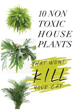10 Non Toxic Houseplants That Wont Kill Pretty Kitty Ponytail Palm Common House Plants Jessica Brigham Magazine Ready for Life