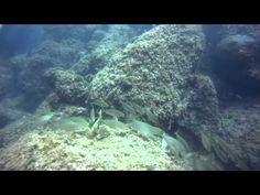 Inmersión en el Tascó Petit. Illes Medes